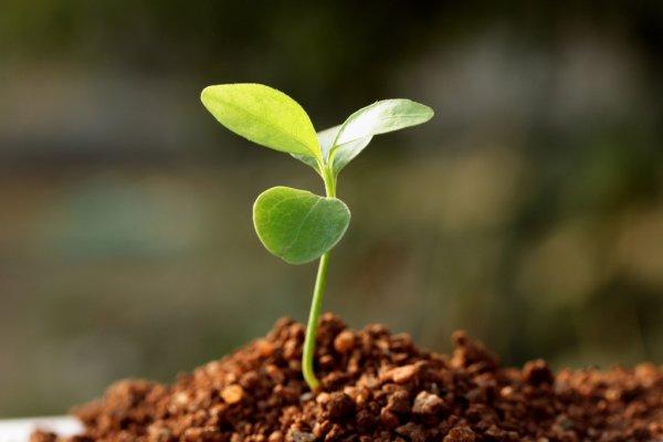 Uma semente que germina e cresce